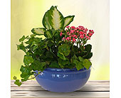 Jewel Tone Dish Garden - Deluxe in Dallas TX, In Bloom Flowers, Gifts and More