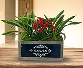 Market Fresh Garden Planter - Deluxe in Dallas TX, In Bloom Flowers, Gifts and More