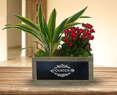 Market Fresh Garden Planter in Dallas TX, In Bloom Flowers, Gifts and More
