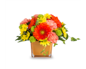 CITRUS TWIST in Truro NS, Jean's Flowers And Gifts