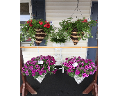 Hanging Baskets in Columbiana OH, Blossoms In the Village