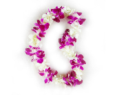 Single Orchid Lei in Cerritos CA, The White Lotus Florist