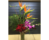 Tropical Love in Lubbock, Texas, House of Flowers
