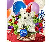 Happy Birthday Doggie in Aston PA, Wise Originals Florists & Gifts