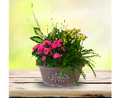 Southern Charm Planter in Dallas TX, In Bloom Flowers, Gifts and More