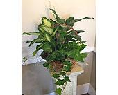 New Berlin Flowers - Burlap Dish Garden - Barb's Green House Florist
