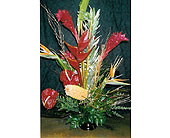 Tropical Delight in The Woodlands TX, Botanical Flowers and Gifts