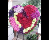 Arrowhead Hearts in Glendale, Arizona, Arrowhead Flowers