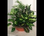 Medium Terracotta Planter