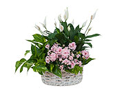 Living Blooming White Garden Basket in Prospect KY, Country Garden Florist