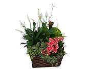 Living Blooming Garden Basket in Prospect KY, Country Garden Florist