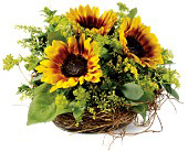 Nesting Sunflowers