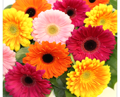GERBERA BOUQUET in London ON, Posno Flowers