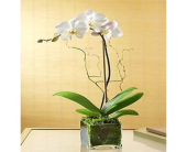 Fishers Flowers - Exotic Orchid Planter - George Thomas, Inc.