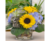 Fishers Flowers - Sunflowers & Succulents - George Thomas, Inc.