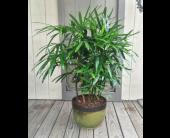 Green Drama in Covington, Kentucky, Jackson Florist, Inc.