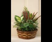 Winchester Flowers - Dish Garden Basket - Flowers By Snellings