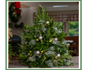 White Christmas Boxwood Tree in Wolfeboro NH, Linda's Flowers & Plants