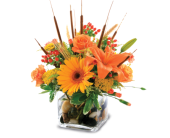 Thanskgiving Cattails in Moline IL, K'nees Florists