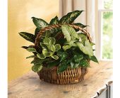 Emerald Garden Basket in Indianapolis, Indiana, George Thomas Florist