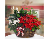 Blooming Poinsettia Basket  in San Clemente CA, Beach City Florist