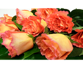 24 Orange Roses Wrapped in London ON, Posno Flowers