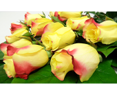Yellow Roses Wrapped in London ON, Posno Flowers