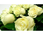 White Roses Wrapped in London ON, Posno Flowers