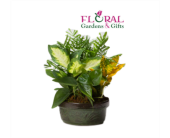 Dish Garden Small in Palm Beach Gardens FL, Floral Gardens & Gifts