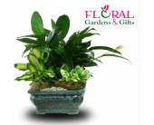 Dish Garden Large in Palm Beach Gardens FL, Floral Gardens & Gifts