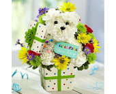 Party Dog in Aston PA, Wise Originals Florists & Gifts