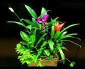 Orchid Shabby Chic in Eden Prairie, Minnesota, Belladonna Florist