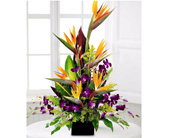 Tropical Array in Baltimore MD, Raimondi's Flowers & Fruit Baskets
