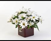 Bozeman Flowers - Simple Daisies - Langohr's Flowerland