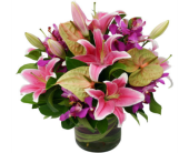 Blushing Tropics in Nashville TN, Emma's Flowers & Gifts, Inc.