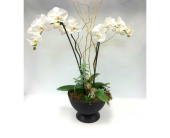Double Orchid Garden in Belleville ON, Live, Love and Laugh Flowers, Antiques and Gifts