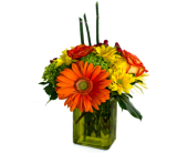 Citrus Kiss in Nashville TN, Emma's Flowers & Gifts, Inc.