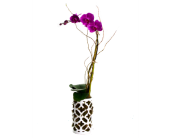 Valentine Orchid in Nashville TN, Emma's Flowers & Gifts, Inc.