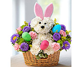 Hop Into Easter in Aston PA, Wise Originals Florists & Gifts