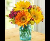 San Jose Flowers - Spring Sunflowers         - Santa Clara Citti's Florist