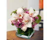 Lawrenceville Flowers - Lovely Orchids - Monday Morning Flower & Balloon Co.