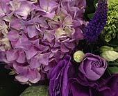 Toronto Flowers - Amethyst-Florist Choice - Bloominghill Flowers