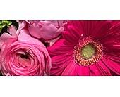 Toronto Flowers - Rose Quartz-Florist Choice - Bloominghill Flowers