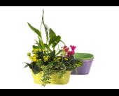 Indoor Planter Garden in Victoria, British Columbia, Jennings Florists