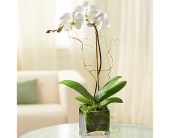 Orchid Brilliance in Largo FL, Rose Garden Flowers & Gifts, Inc
