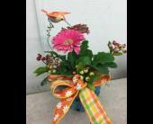 New Berlin Flowers - Mini Gerbera Plant - Barb's Green House Florist