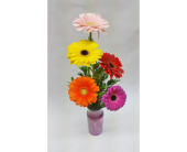 Gerbera Daisy Vase in Weyburn SK, Brady's House Of Flowers
