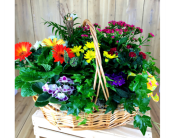 Basket Full of Color in Baltimore MD, Raimondi's Flowers & Fruit Baskets