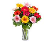 Carmel Mountain Flowers - Grand Gerbera - Poway Country Florist