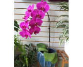 Purple Phalaenopsis  Orchid in Toronto ON, Simply Flowers